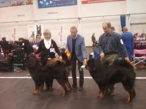 Rahvuslik koertenäitus Rakveres 21.10.2017 Kohtunik Hans Almgren Rootsi Tšempionklass 1.koht, VSP